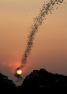 Bat swarm at sunset, Phnom Sampow, Cambodia, by Jean De Spiegeleer