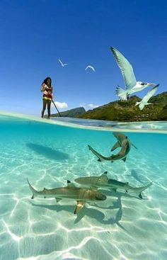 Paddle Boarding with the Sharks!  #Ocean #Sea #Sharks #PaddleBoarding