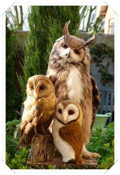 Baykuş aile resmi
