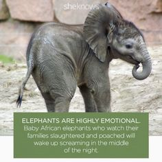 Elephants get emotional