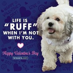 #Brewers #Valentine #ValentinesDay #BallparkPup
