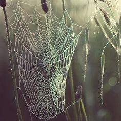 Wabi - Sabi 侘寂 Spider Web