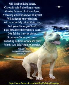 86 Best Anti Dogfighting Campaign Images Campaign Dog Fighting Goal