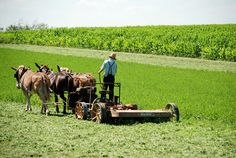 Lancaster county, Pa...Amish