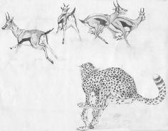 Cheetah chasing buck 1990.  #pencil #drawing #drawings #animals #africa #cheetah #impala