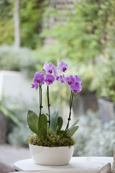 Here's How to Get Your Orchid to Bloom Again