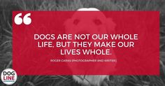 #dog #puppy #pup #dogline #doglinedaily #cute #eyes #instagood #dogs_of_instagram #pet #pets #animal #animals #petstagram #petsagram #dogsitting #photooftheday #dogsofinstagram #ilovemydog #instagramdogs #nature #dogstagram #dogoftheday #lovedogs #lovepuppies #hound #adorable #doglover #instapuppy #instadog