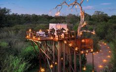 Lion Sands Game Reserve, South Africa Treehouse hotels: The Fab Five - Telegraph