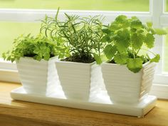 how to plant an indoor herb garden...I love my big raised herb garden in the back and herbs are an easy way to add lots of flavor when you are cutting out fats, salt, etc.