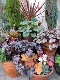 Garden Cafe, Garden Deco, Container Plants, Container Gardening, Coral Bells Heuchera, Garden Photos, Garden Planters, Shade Garden, Garden Styles
