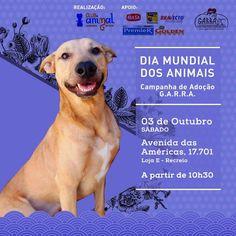 G.A.R.R.A. - Grupo de Ação, Resgate e Reabilitação Animal: Final de semana especial dos Garrinhos! Participe!...