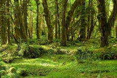 State: WashingtonRecreational visits (2016): 3,390,221This park contains several distinct ecosystems... - rachel_thecat / Wikimedia