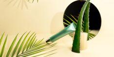 The Many Aloe Vera Benefits for Skin | Shape Spot Treatment, Aloe Vera For Skin, Aloe Vera Gel, Aloe Benefits, Skin Md, Contact Dermatitis, Salicylic Acid, Skin Care