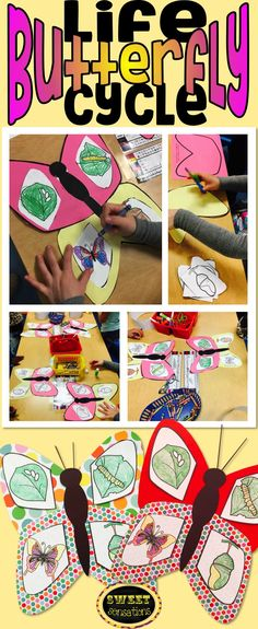 Simple butterfly craft for students in kindergarten, pre-K and pre-school.  Make a butterfly and put the life cycle on the wings.