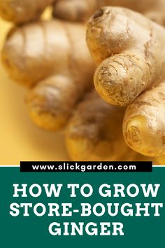 Growing ginger in container is not that hard. We can grow ginger from store-bought pieces of ginger using potting soil. Growing Vegetables In Pots, Regrow Vegetables, Easy Vegetables To Grow, Container Gardening Vegetables, Growing Plants, Succulent Containers, Container Flowers, Container Plants, Ginger Plant
