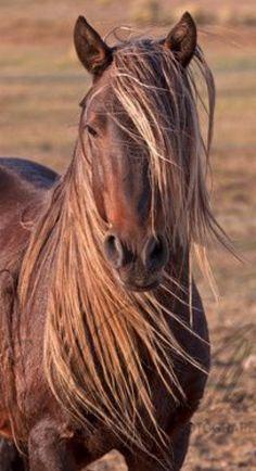 Cholla.   New Mexico Mustang