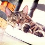I think I may need to start planning a trip to San Francisco this summer! Such a fun idea. This cafe will have adoptable cats that are looking for their forever homes. What do you think about a cat cafe?