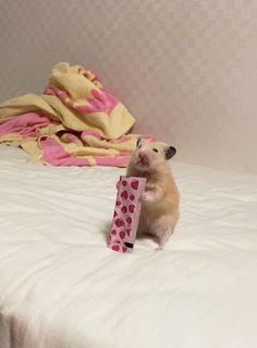 Cute Cat Memes, Funny Animal Memes, Funny Animals, Hamster Pics, Hamster Cages, Funny Hamsters, Cute Cows, Cute Little Animals, Cute Creatures