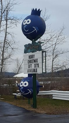 Blueberries. Granite Town. St George. NB Canada