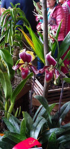 Flowers, Plants, Flora, Royal Icing Flowers, Floral, Plant, Florals, Flower, Bloemen