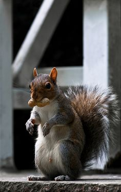 #squirrel #squirrels