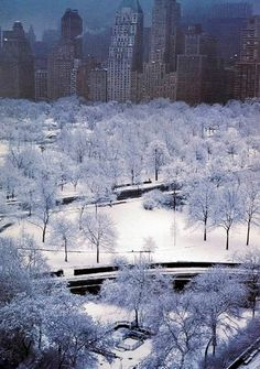 Central Park, Places To Travel, Places To See, New York Weihnachten, Winter Szenen, Winter White, Ville New York, New York Christmas, Little Italy