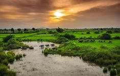 This is the pic taken from a moving train during sunset , with greenery of the konaseema region andhra Pradesh . Open Spaces, Greenery, Golf Courses, Good Things, Sunset, Nature, Naturaleza, Sunsets, Nature Illustration