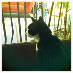 Happy Caturday from Clyde at Feeding Birds Boutique!