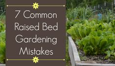Container Gardening For Beginners If you're planning a raised bed garden for the first time or adding to your existing beds, avoid these 7 mistakes common in raised bed gardening. Veg Garden, Garden Pests, Garden Boxes, Garden Fertilizers, Vegetable Gardening, Raised Bed Garden Design, Building A Raised Garden, Green Building, Gardening For Beginners