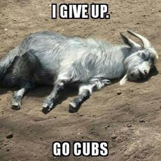 Lol That's right, Go Cubs!!! ❤️