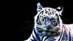 Animals Cool Wallpapers HD - CuteWallpaper.org
