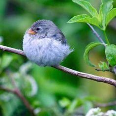 Fat bird..;)