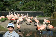 Read parent reviews of the San Francisco Zoo - San Francisco, CA - Kid friendly activity reviews - Trekaroo.com