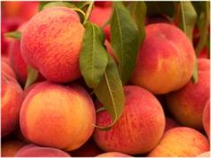 May Pride Peach trees produce a very early-ripening, delicious and sweet fruit that's a great snack any time of the day and a welcome addition to a variety of recipes. It's a low chill variety Healthy Fruits, Healthy Recipes, Healthy Foods, Healthy Eating, Lemon Recipes, Diabetic Recipes, Summer Recipes, Healthy Life, Peach Mousse