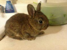 My little bunny Cookie Stump.