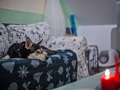 How Air Fresheners Can Affect Your Pet's Health