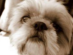My cute little puppy, Yvette (5)