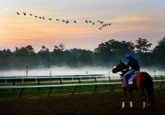 Geese fly from the pond in the infield at the Saratoga Race Course in Saratoga Springs, N.Y.