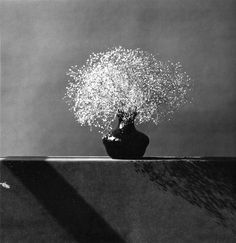 ^Baby`s breath, 1982. ©Robert Mapplethorpe