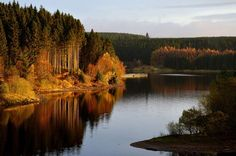 Autumnal colours at Kielder Water and Forest Park in Northumberland as weather experts predict a cold spell of weather cm) Fine Art Print Framed, Poster, Canvas Prints, Puzzles, Photo Gifts and Wall Art Northumberland England, Fine Art Prints, Framed Prints, Family Days Out, Family Family, Forest Park, Free Things To Do, National Photography, Poster Size Prints