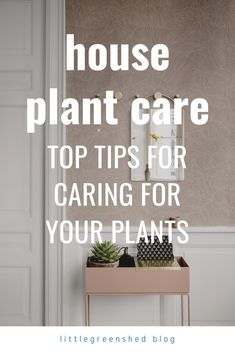 house plant care, botanical tips House Plant Care, House Plants, Cool Plants, Air Plants, Easy Garden, Garden Ideas, Plant Species, Plant Needs, Window Boxes
