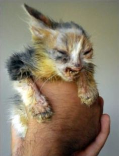Abandoned Cat Before Picture | This Abandoned Cat Was Left For Dead Until It Was Rescued