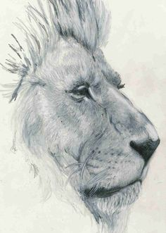 art. drawing. lion. animal.