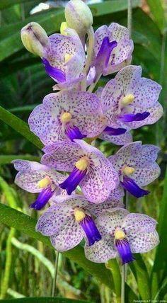Orchid #rarebeautifulflowers #orchidsrare