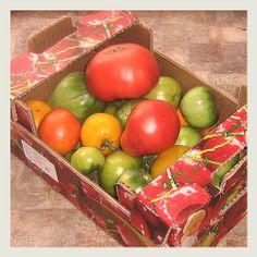 Овощи, помидоры