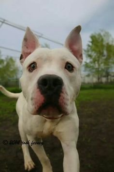 Rio #adoptable at #CACC adoptable pets on Facebook in #Chicago