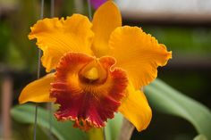 20 Stunning Tropical Flowers From Around The World