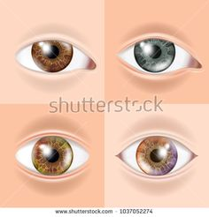 Human Eye Set Vector. Vision Concept. Medical Eye Diagnostic. Sight, Eyesight. Organ Test. Body Care. Realistic Detail Illustration