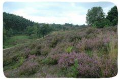 Toegangspoort Mechelse Heide – Maasmechelen | Toerisme Limburg