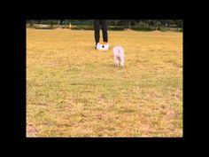 야외 잔디위에서 볼레디와 함께 신나게 놀고 먹는 우리 강쥐... - YouTube